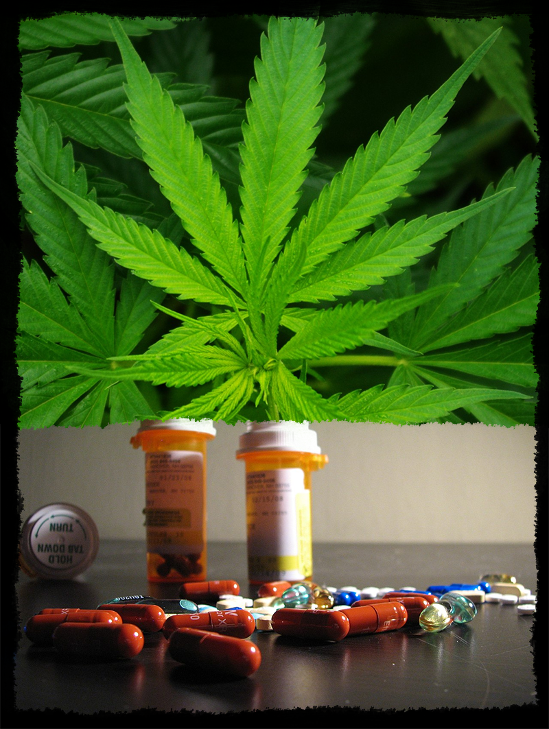 Marijuana As A Substitute For Pain Pills